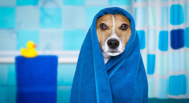 Come lavare un cane che ha paura dell'acqua