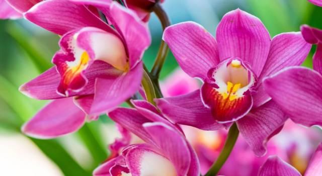 Come curare le orchidee al meglio? I consigli più utili, anche per potarle