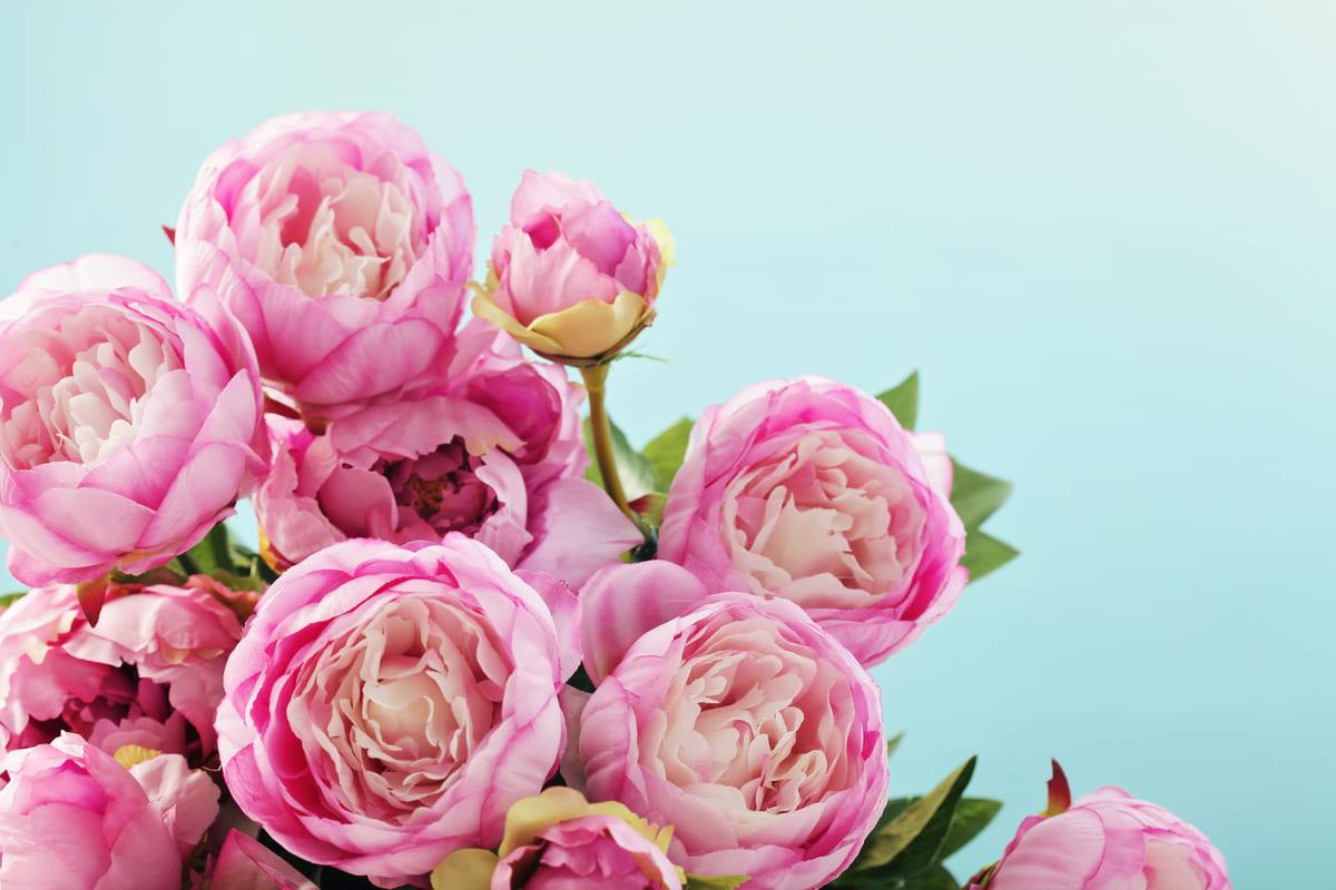 bouquet mazzo fiori rosa peonie