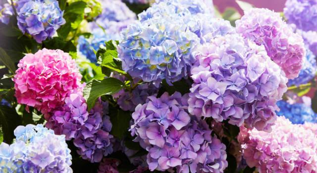Quali sono decorazioni fiori autunnali