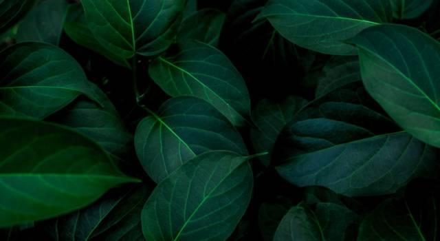 Come realizzare sottopiatti con le foglie