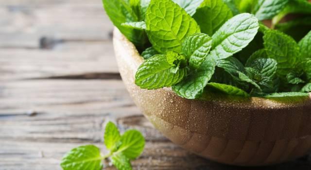 10 piante medicinali ad azione deodorante