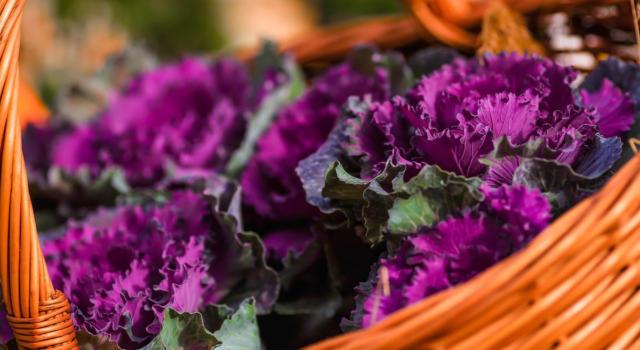 Come curare cavolo ornamentale in giardino