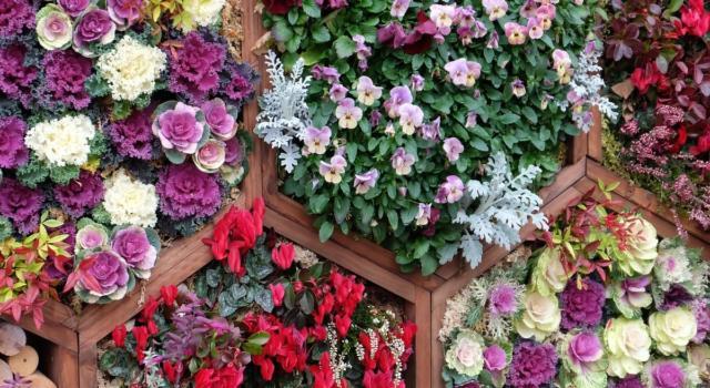 Come realizzare giardino verticale
