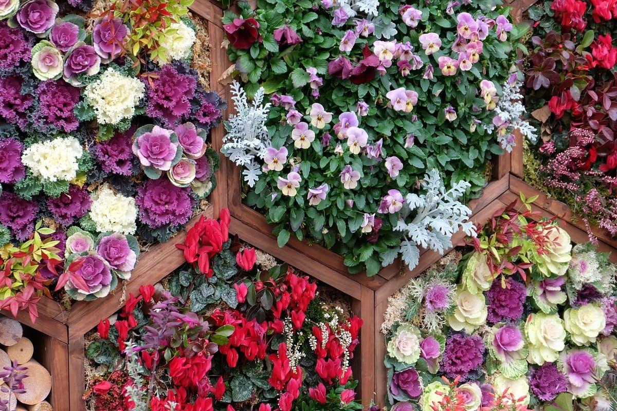 fiori fioriera verticale