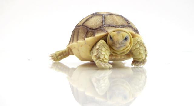 Come tenere una tartaruga in casa