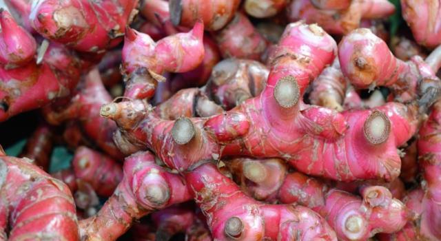 Come curare zenzero rosso in giardino