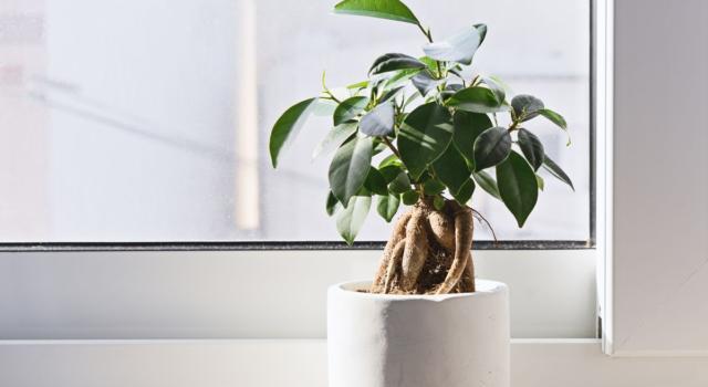 Quali sono le piante che purificano l'aria di casa?
