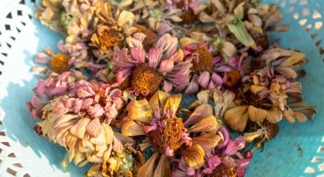 Essiccare i fiori freschi: tutti i modi per creare splendide composizioni