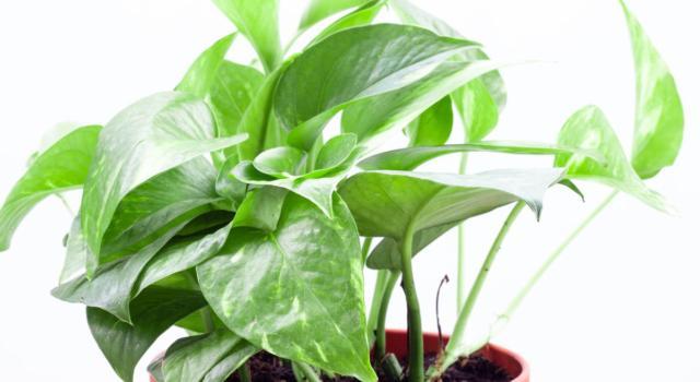 Come coltivare piante antismog in casa