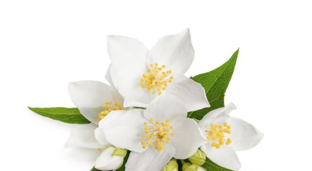 I fiori da giardino per l'estate più utili, belli e facili da coltivare