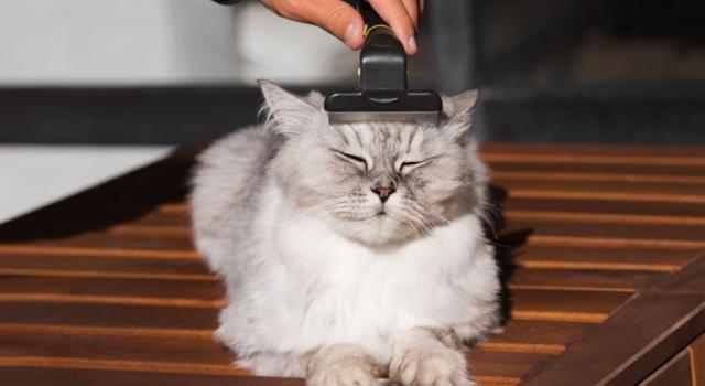 Ogni quanto spazzolare il pelo del gatto