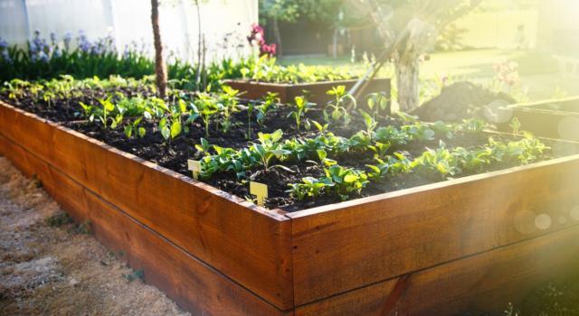 Lavori da fare in giardino a maggio