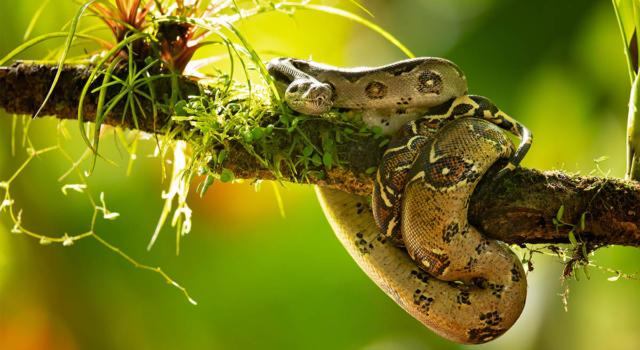 Come fare repellenti per serpenti in maniera naturale?