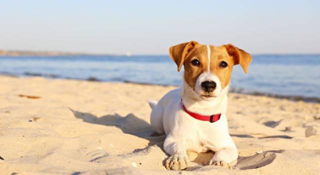 Le spiagge per cani in Calabria e in Sicilia