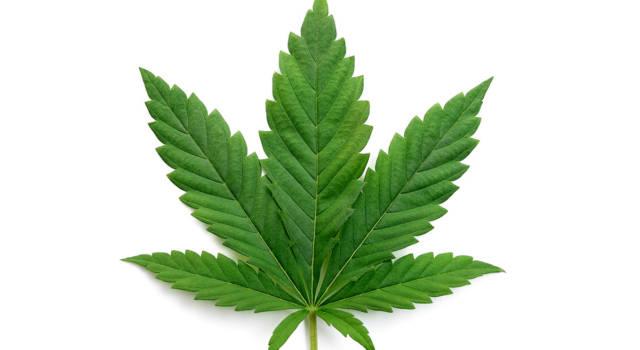 Quando la legalizzazione della cannabis in Italia?