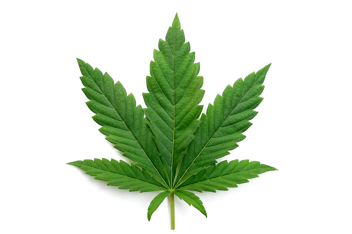 Foglia Cannabis