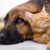 La storia di Ruby, doberman che ha accolto un gattino nella sua cucciolata