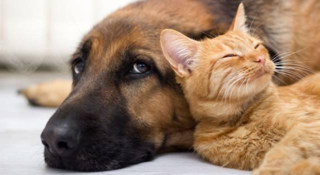 L'incredibile storia della gatta allevata da un cane