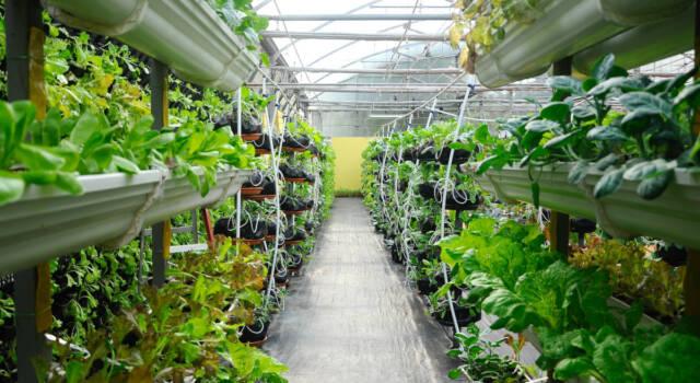 Vertical farm in casa