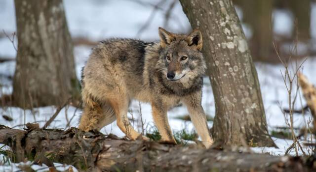 3 Marzo: la Giornata Mondiale della Fauna Selvatica