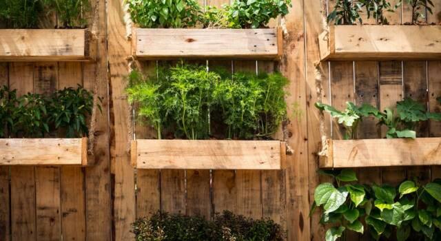 Dove comprare un orto verticale?
