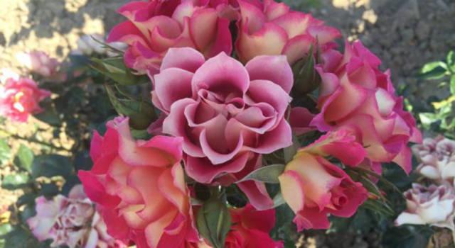 Ballo di Brera: la prima edizione che celebra l'estate e la Rosa di Brera