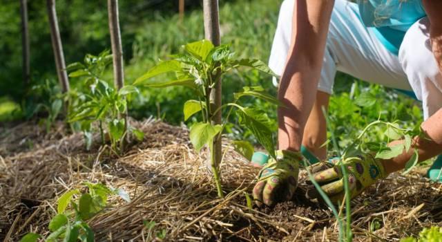 Lavori da fare in giardino a giugno