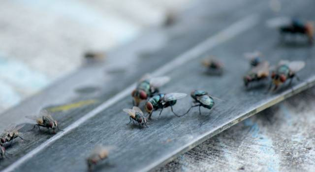 Come fare repellenti naturali per insetti