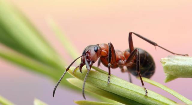 Quanto bicarbonato usare per togliere le formiche