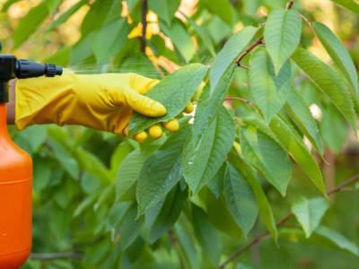 Quali sono i migliori insetticida naturali e come prepararli?