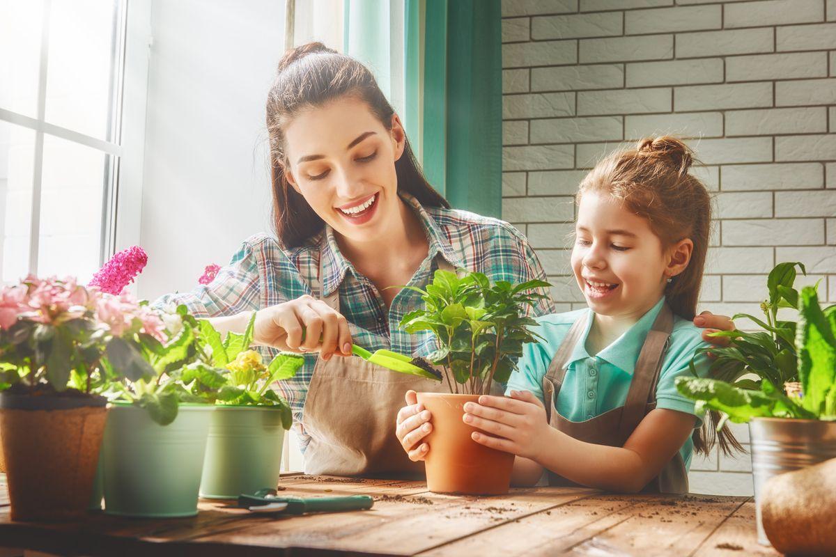 Come Curare Le Piante come prendersi cura delle piante da appartamento: 3 segreti