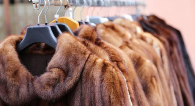La California vieta le pellicce, la legge è stata appena approvata!