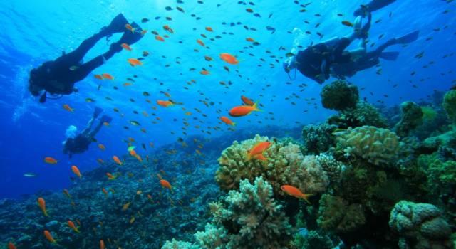 Quanto fa dimagrire fare immersioni subacquee