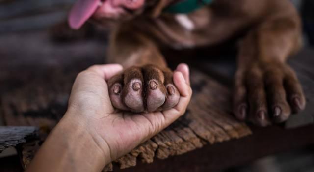Come disinfettare le zampe di cane e gatto… ma anche il pelo!