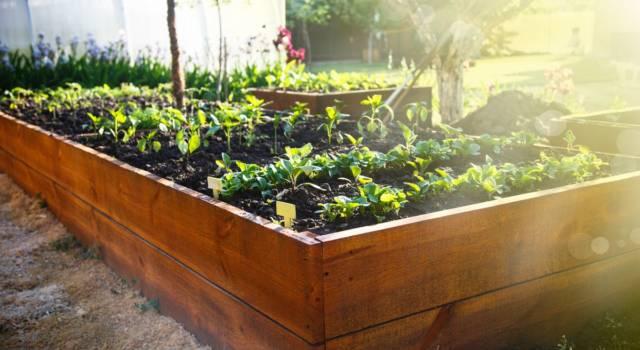 Come coltivare pianta autofiorente in balcone