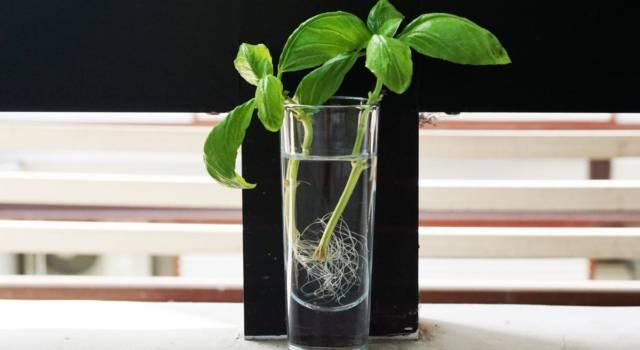 Coltivare in acqua fiori, verdure e piante: è facilissimo!