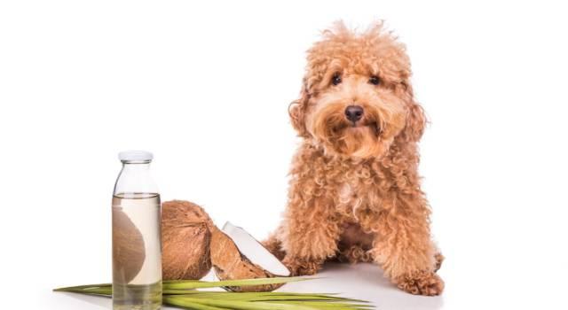 Repellente per cani: come realizzarlo in maniera naturale