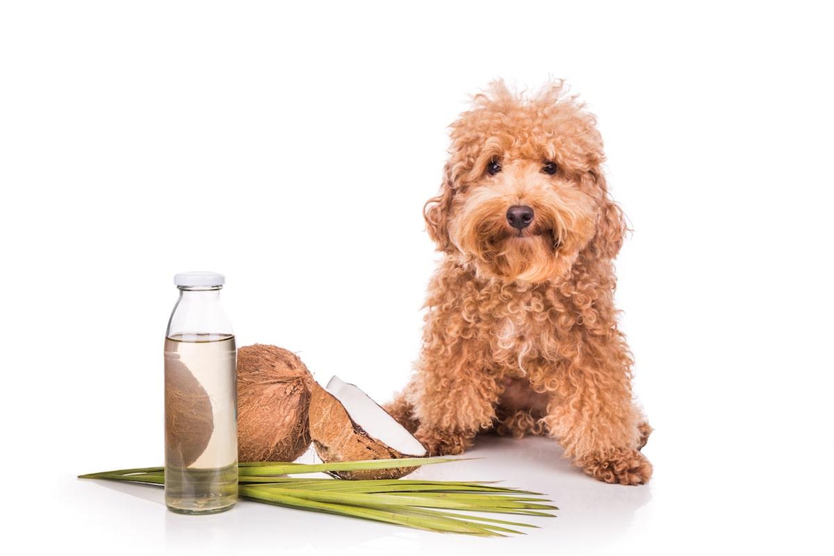 Repellente per cani