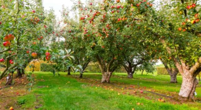 Quali sono le piante da frutto a novembre