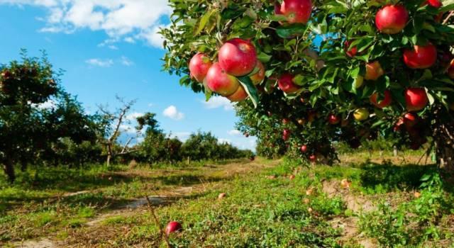 Quali sono le piante da frutto di novembre