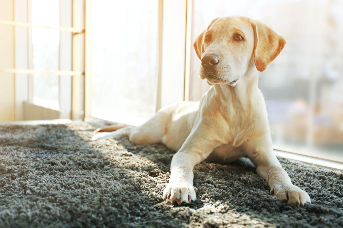 Peli di animali sui tappeti