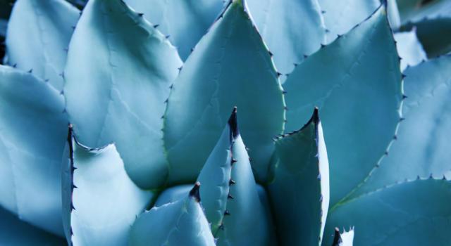 Le più belle piante grasse da esterno, per rendere splendido il tuo balcone