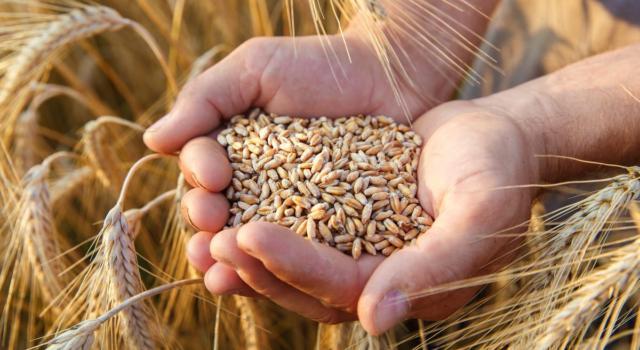 Cos'è il glutine e quali cereali lo contengono