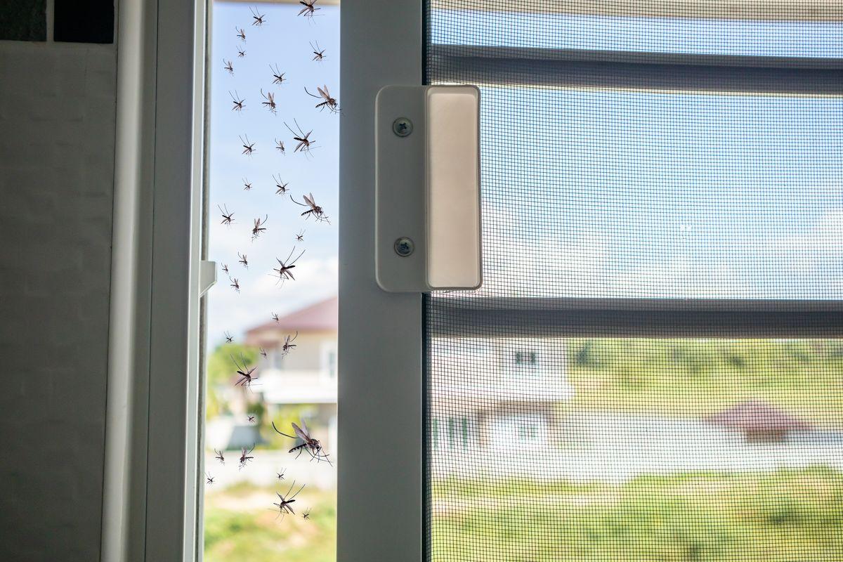 Insetti sulla zanzariera