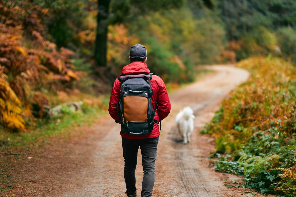 Uomo escursione bosco