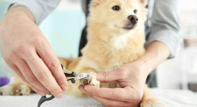 Come tagliare le unghie al cane? Ecco a cosa bisogna stare attenti