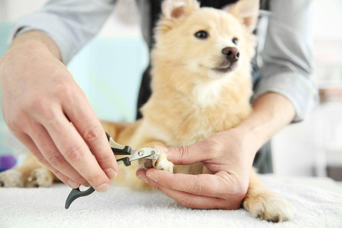 Toeletta unghie al cane