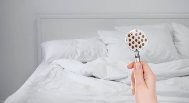 Cimici da letto: chi pungono e che genere di punture provocano