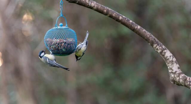Mangiatoie per uccelli: come costruirle in modo semplice e veloce